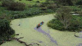 Amazon / Puerto Maldonado