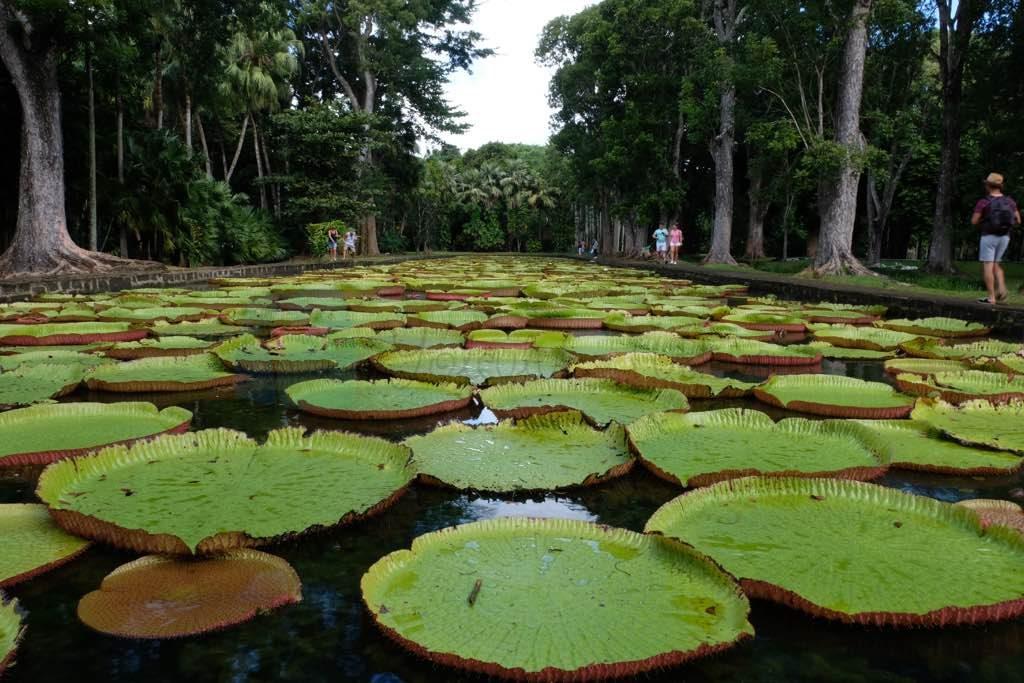 Sir Seewoosagur Ramgoolam Botanical Garden Mauritius görülecek yerler