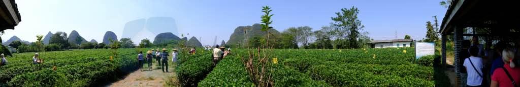 Çay Çiftliği Yangshuo